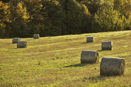 Hay Bales Stock Photo - 11499681