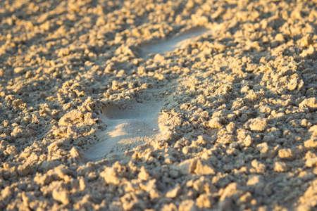 Footprints close-up on a beach. Stock Photo