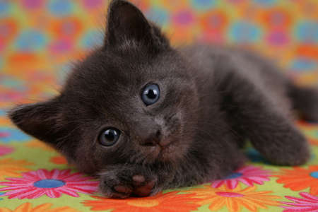Kitten At Rest