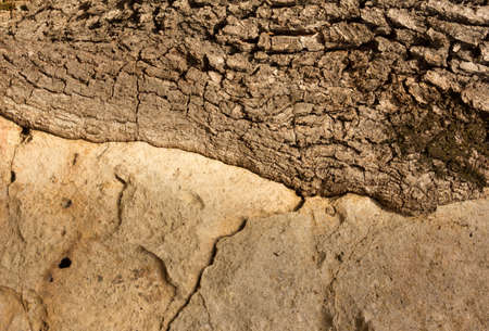 grew: the stone which grew into a tree