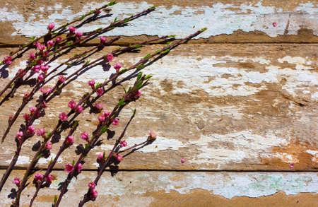alberi da frutto: i rami in fiore di alberi da frutto sulla vecchia struttura