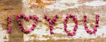 declaration of love from the petals of peach photo