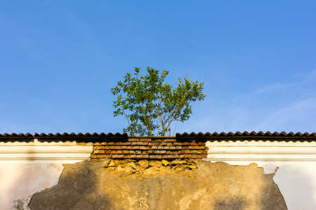 grown: tree grown on the roof of an old building