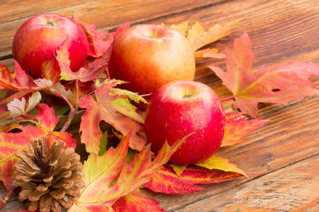 pine three: three red ripe apples, pine cones and bright autumn leaves of maple on a wooden background closeup