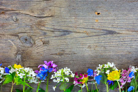 barn board: Wild colorful spring flowers on an old cracked wooden barn board. Copy space Stock Photo