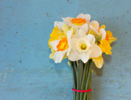 ladylike: bouquet of spring flowers Narcissus on an old blue background. copy space Stock Photo