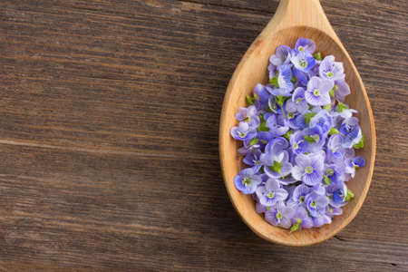 speedwell: pale blue flower petals plants Persian speedwell in a wooden spoon on old wooden board in the cracks close up. aromatherapy, herbal tea, homeopathic medicine. Free space for text. Copy space