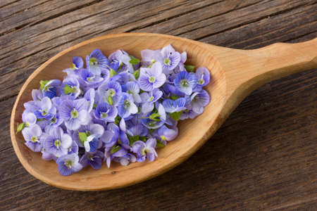 speedwell: pale blue flower petals plants Persian speedwell in a wooden spoon on old wooden board in the cracks close up Stock Photo
