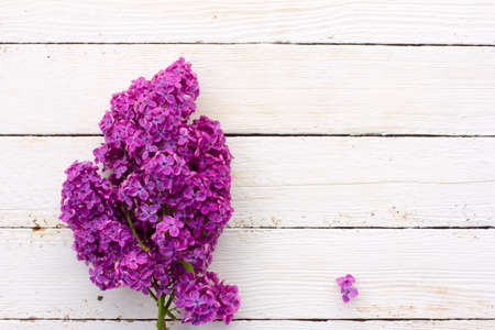 posting: bouquet of purple lilac flowers on a white wood plank background. with space for posting information Stock Photo