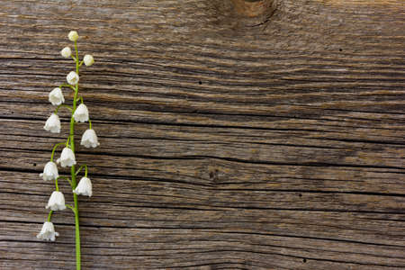 posting: white flower lily of the valley on a background of old gray barn board cracks. with space for posting information