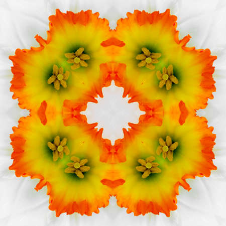 reflexion: abstract decorative pattern of orange flowers on the Narcissus with a kaleidoscope effect. for greetings or wrapping paper