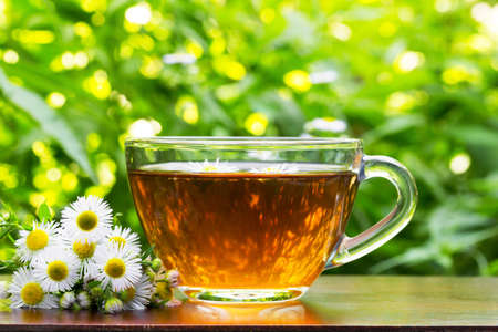 natural vegetation: glass cup of tea with camomile flowers and camomile on the natural green vegetation background closeup
