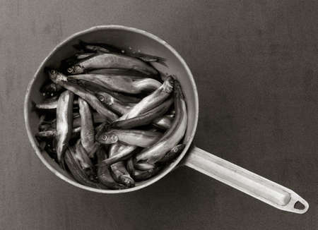 raw fish capelin in the old aluminum colander on a gray background, top view. black and white photo