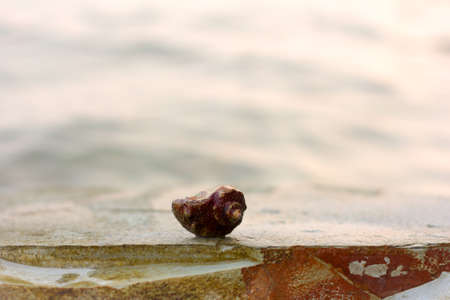 cancer crab: cancer hermit crab in the shell on a rock on the sea background, selective focus
