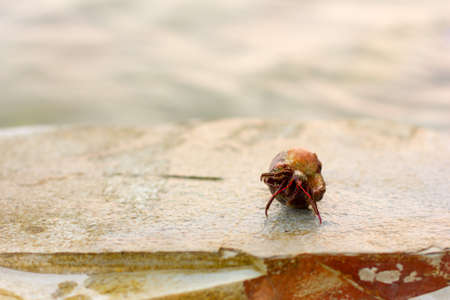 Cancer hermit in a shell on a rock against the sea, selective focus Stock Photo