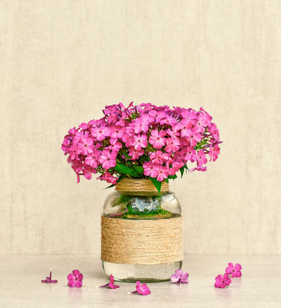 tinted: flower bouquet of Phlox in vase homemade closeup on gray background closeup. tinted photo Stock Photo