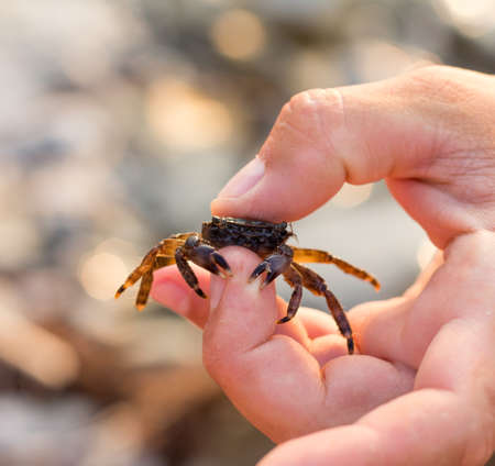 little crab in the mens fingers, selective focus Stock Photo