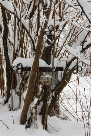 neglected: old neglected grave with iron cross overgrown with trees and bushes covered with snow
