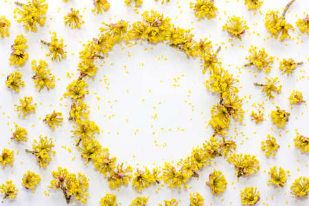 Floral pattern with yellow flowers dogwood with empty space for text on a  on white background. Flat lay, top view Stock Photo