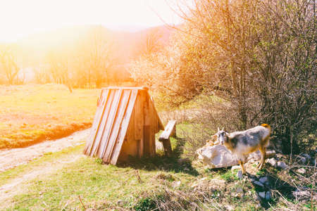 rural landscape, the goat and the old well in the Golden rays of the morning sunlight Stock Photo