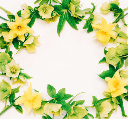 Flower frame with space for text from flowers Narcissus and hellebore on white background