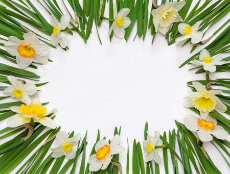 spring floral frame of flowers and green leaves of Narcissus on white background with space for text