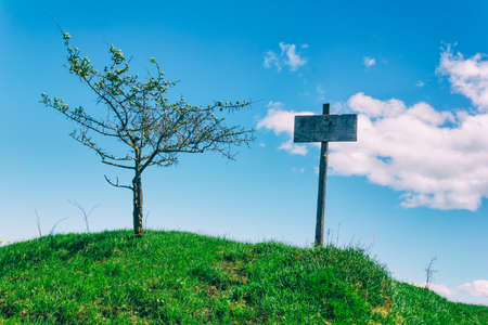 old wooden pointer on a green hill next to the tree on the background of blue sky
