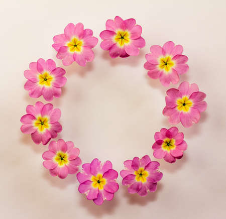 circular floral frame of pink primrose flowers with space for text. Flat lay, top view Stock Photo - 78349764