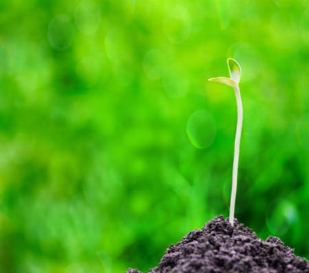 Green sprout growing out from soil on blurred green bokeh background Stock Photo