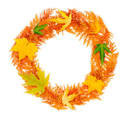 autumn composition. a round wreath of autumn red twigs of thuja and maple leaves on white background with copy space. mock up for text, congratulations, phrases, lettering