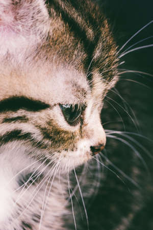 macro photography portrait of a cute cat face closeup 스톡 콘텐츠
