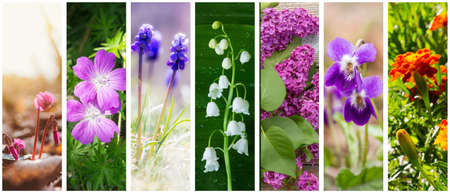 a collage of spring and summer flowers: cyclamen, Lily of the valley, lilacs, marigolds, violets and geranium forest (photo mine) Stock Photo