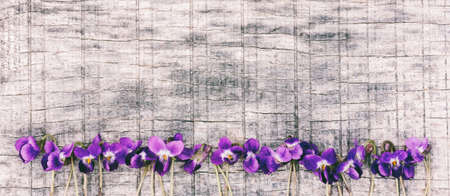 flowers scented violets (Víola odorata) on grey wooden Board with space for text.