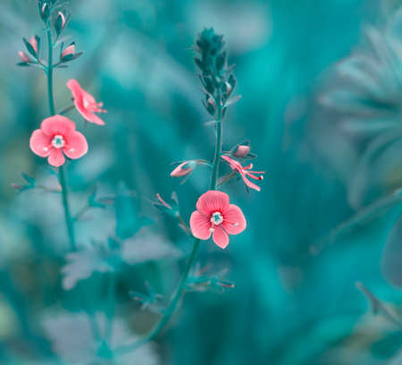 Early spring forest pink flowers on a gently blurred blue background, shallow depth of field