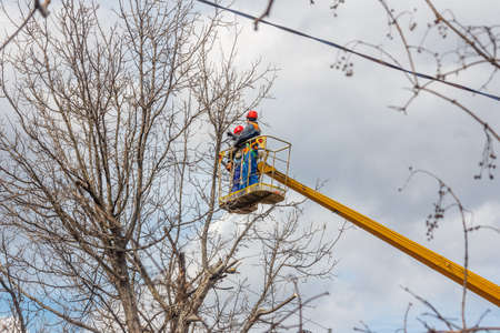 electricians clean electric wires do tree trimming at height