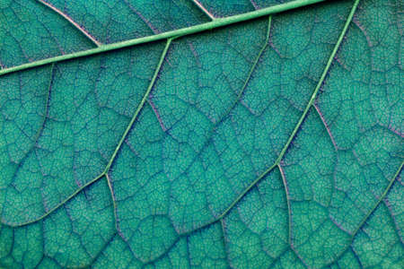 light blue abstract macro texture leaf close-up