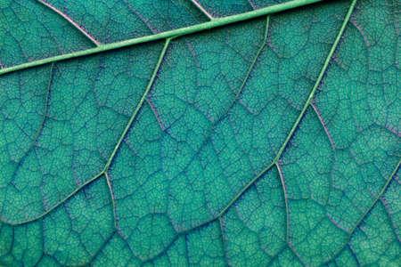 light blue abstract macro texture leaf close-up Foto de archivo - 104109902
