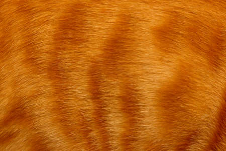 Background texture striped ginger catt fur, wool close up Stock Photo