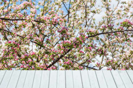 Spring background with flowering apple tree and white wooden planks for product display