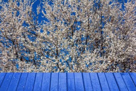 Spring background with flowering trees and blue wooden planks for product display