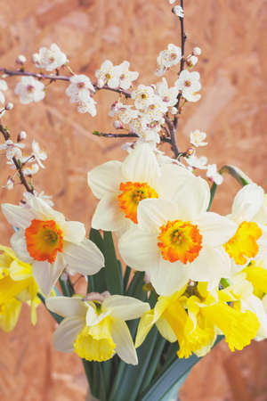 spring bouquet of flowers of narcissus and blooming twigs of fruit tree close-up