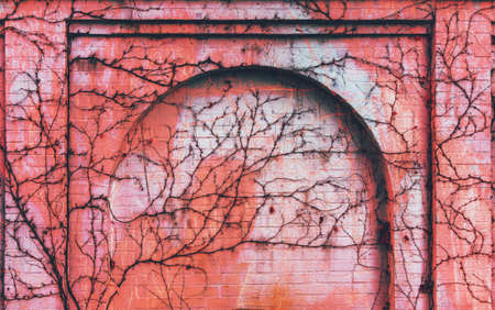 brick wall with arch overgrown with climbing plants, toned in the color of living coral Stock Photo