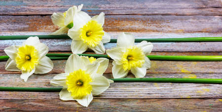 the pattern of flowers narcissuses at retro wooden background with copy space Stock Photo