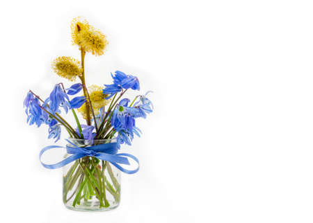 bouquet of bluebell and a sprig of flowering willow in a glass jar with a bow of blue ribbon on a white background with a copy space