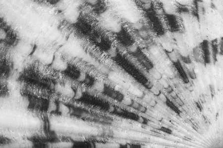 macro photo of the texture of the seashells top view closeup, black and white photo