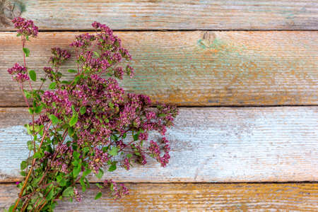 herb, seasoning sprigs of flowering oregano on a wooden vintage background with copy space Zdjęcie Seryjne