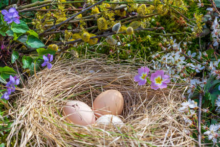 Easter still life with chicken eggs in a nest on the background of branches of flowering willow, primroses and violets