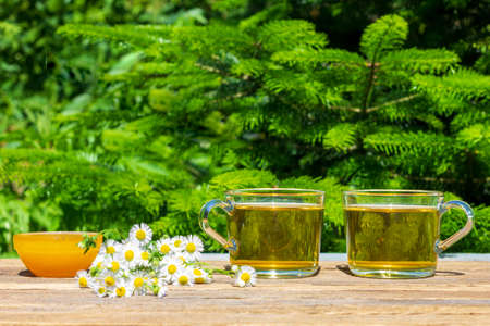 two cups of green camomile tea, honey in a bowl and a bunch of chamomile on the table close-up outdoors on a Sunny summer day, on a natural green background with a copy space