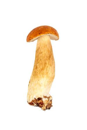 porcini mushroom closeup isolated on a white background