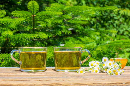 two cups of green chamomile tea, honey in a bowl and a bouquet of camomile on a table close-up outdoors on a sunny summer day, on a natural green background with copy space